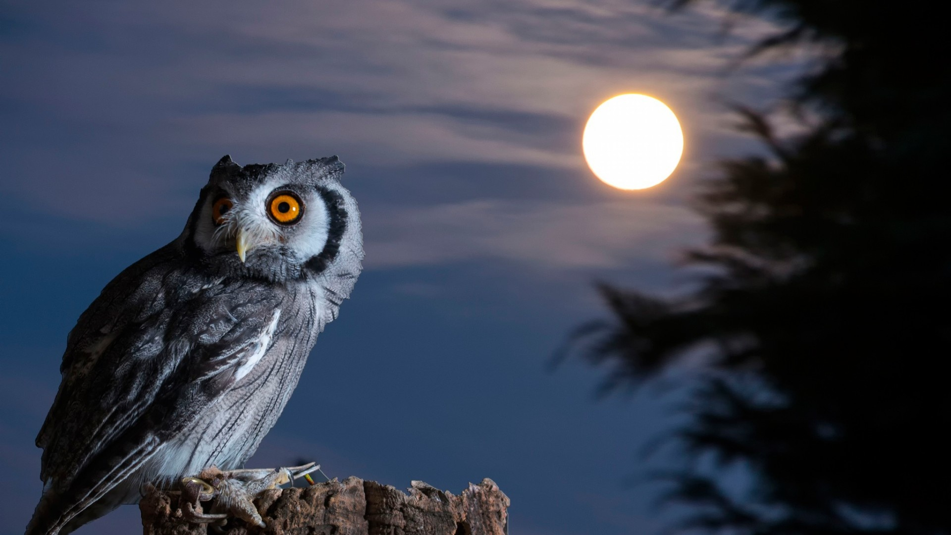 Night Owl Moon Hd Wallpaper Desktop Wallpapers 4k High Definition